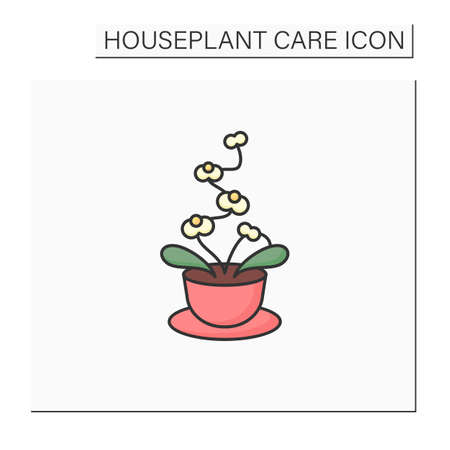 Phalaenopsis color icon