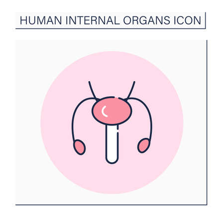 Reproductive system color icon Vector Illustration