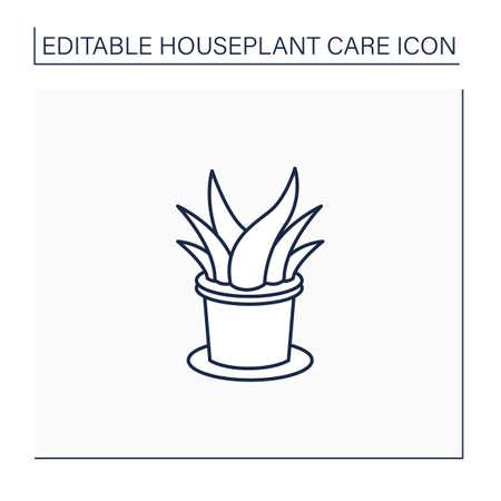 Aloe vera line icon