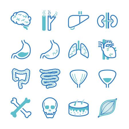 인간의 내부 장기 아이콘 세트 - 그림