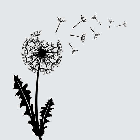 overblown: Blow dandelion floral background concept Illustration
