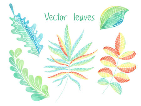 Leaves vector set, hand drawn foliage eco collection.Floral decoration elements