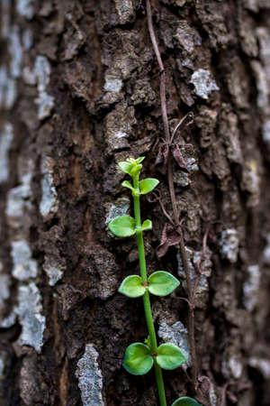 Parasitic plant 版權商用圖片