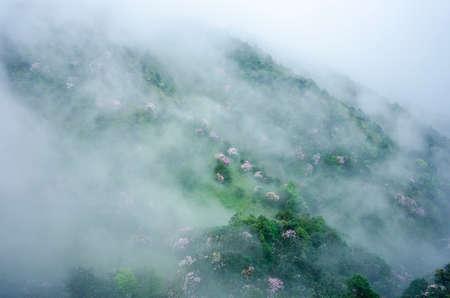 fog in the azalea sea