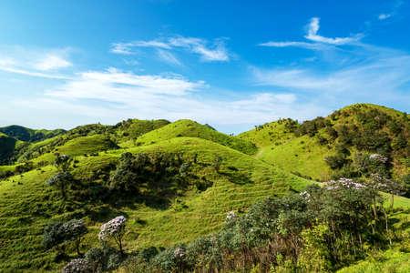 Azalea shrubs and alpine meadows under blue sky in Jilongding, Yangchun City, Yangjiang City, Guangdong Province