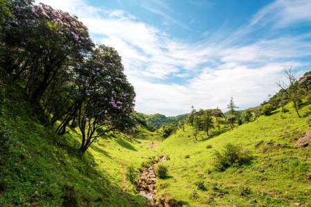 Valley grassland and rhododendron forest under blue sky in Jilongding, Yangchun City, Yangjiang City, Guangdong Province