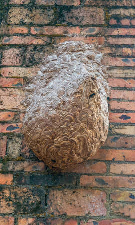 A horse honeycomb built on a red brick wall