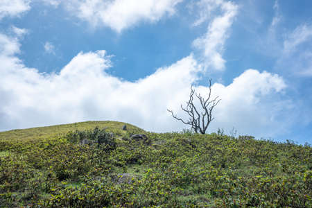 A withered tree under a blue sky and white clouds