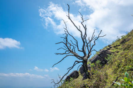 Withered trees on the mountainside 免版税图像