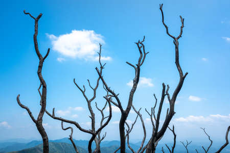 Withered trees under clear sky