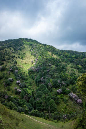 Rhododendron Valley in Yangchun Chicken Cage Top, Guangdong, China