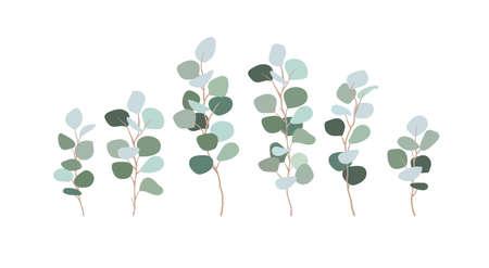 Conjunto de ramas de eucalipto dólar de plata. Clip art verdes para tarjetas de diseño, invitaciones, decoraciones. Hojas azuladas, floristería, ilustración plana. Vector aislado en blanco.