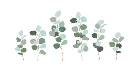 Set of branches eucalyptus silver dollar. Clip art greens for design cards, invitations, decorations. Bluish leaves, floristry, flat illustration. Vector isolated on white. Vectores