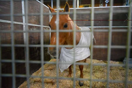 Horse covered with a blanket in a stable