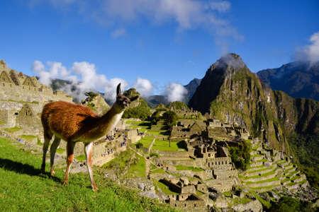 マチュピチュは、ペルーのクスコの近くの前でリャマ。マチュ ・ ピチュは、ペルーの歴史的な聖域です。