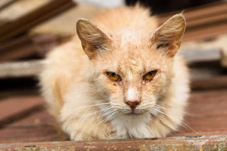 Homeless red cat on a wooden plank. Stock Photo