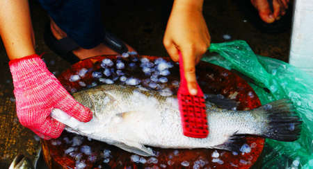 Cutting flesh Tilapia fish for cooking in Thailand Stock Photo