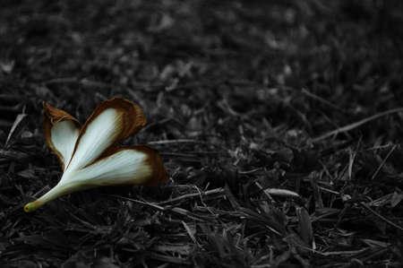 Leelawadee flowers.
