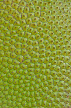 Jackfruit skin photo