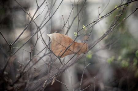puckered: Dry autumn leaf on a branch Stock Photo