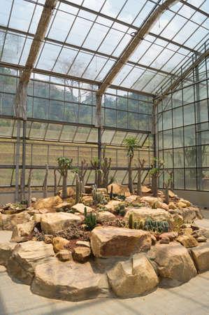 Cactus in a conservatory Glasshouse,Queen Sirikit Botanic Garden, Chiangmai, Thailand photo