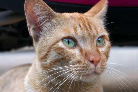 primer plano cara: Una cara de gato de cerca