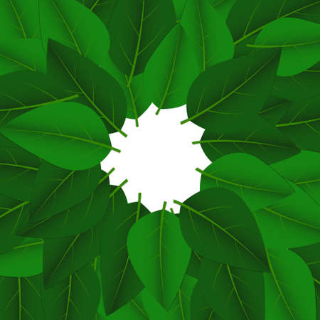 Vector : Green leaves on white background
