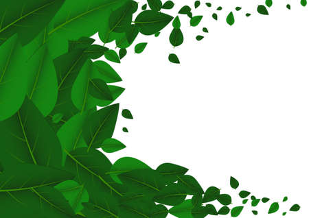Vector : Leaves float on white backgorund