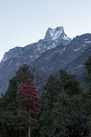 fish tail: Fish tail or Mt.Machhapuchhare on Annapurna trail Nepal