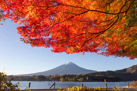 This photo was shot from the area around Mt.Fuji in Autumn. It is time to start snow cap on the top of Mt.Fuji and maple leaves change to autumn color. There are 5 lakes around Mt.Fuji. photo