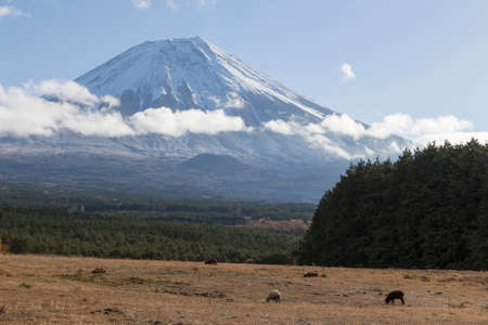 This photo was shot from the area around Mt.Fuji in Autumn. It is time to start snow cap on the top of Mt.Fuji. There are 5 lake around Mt.Fuji. photo
