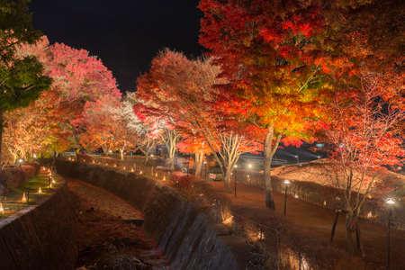 light up: Questa foto � stata scattata dalla zona intorno Mt.Fuji. Il Momiji o acero si illuminano di notte. Questo si chiama corridoio acero o acero tennel al fiume Nashigawa, in Giappone.