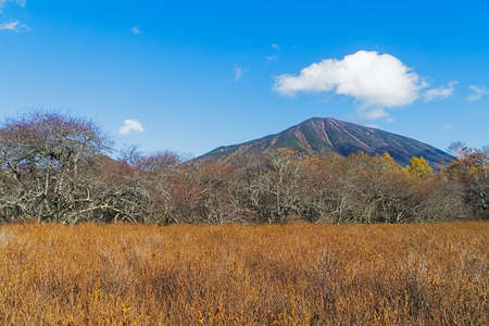 Senjogahara covers the plateau between Chuzenjiko and Yumoto Onsen. It is particularly beautiful during the autumn leaf season in October when the marshlands grasses turn into a reddish yellow and the larch trees into a shiny gold. Фото со стока