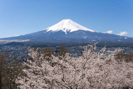 Northern Shores of Kawaguchiko where cherry trees are planted for 1.2km along the lake and Chureito Pagoda are the most scenic views can be captured cherry blossoms and Mt.Fuji. Imagens