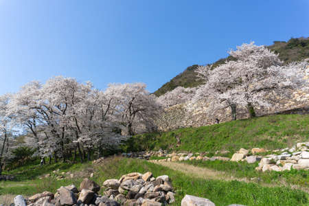 Tottori Castle was originally built in 1532 and served as the regional center of power during Japan's era of warring states. Its Ruins are all that remain on the side of Mount Kyusho at the northeastern end of the city center.