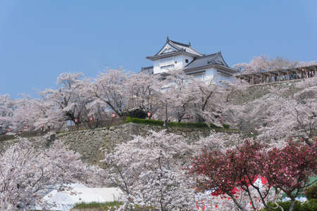 Tsuyama Castle was built about 400 years ago. It has been selected as one of Japan's top 100 castles and has earned a spot as one of Japan's top 100 cherry blossom sites. The Tsuyama Cherry Blossom  gives visitors the chance to experience the park's