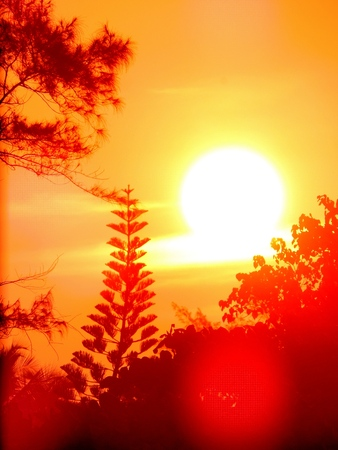 Vibrant sunlight with orange red sky during twilight hours of morning sunrise and evening sunset with trees and flora forming silhouette and orange lens flares visible