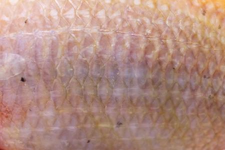 niloticus: Texuture Skin Oreochromis niloticus-mossambicus, Nile tiapia