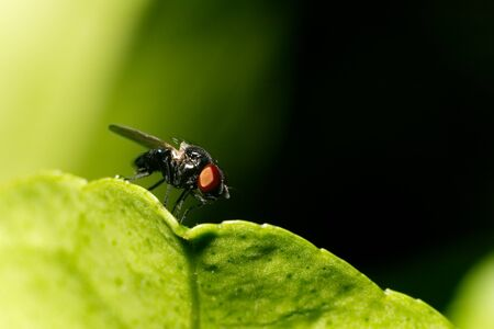 Macro shot of fly on the leaf Stock Photo