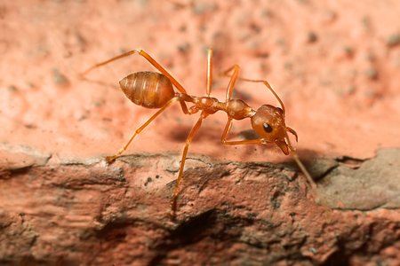 Ant のマクロ撮影