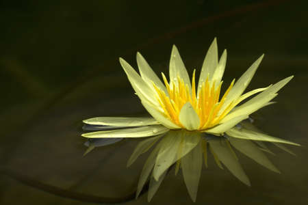 Lotus Stock Photo - 14183893
