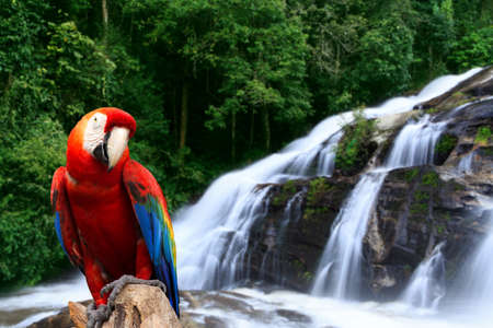 rainforest: Parrot in the rainforest with a waterfall. Stock Photo