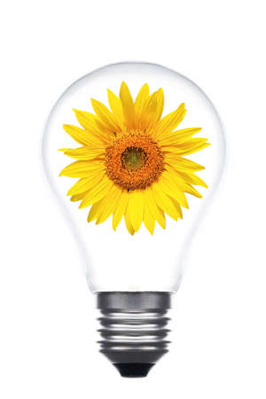 concept of ecological diversity bulb with sunflower inside. photo
