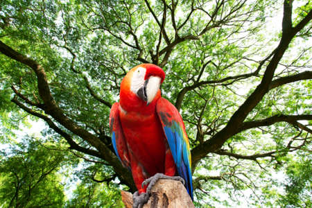 mccaw: parrots macaw in the forest Stock Photo
