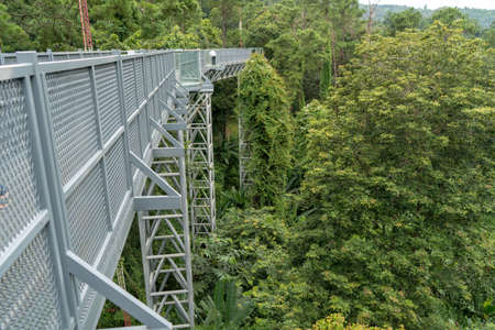 Sky walk In the forest with many trees. Stock Photo