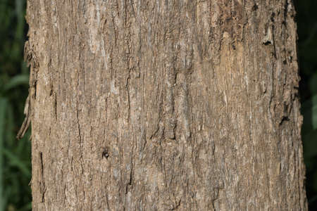 Trunk tree . pattern trunk tree . trunk tree texture background for design