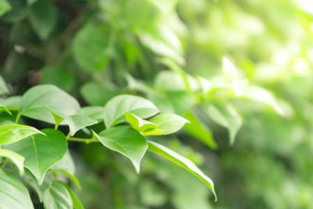 Close-Up nature view of green leaf on blurred greenery background in garden, wallpaper concept.