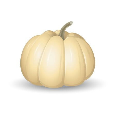 White pumpkin - cartoon vector illustration isolated on white background