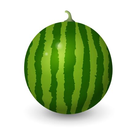 Realistic watermelon vector illustration isolated on white background Stock Illustratie