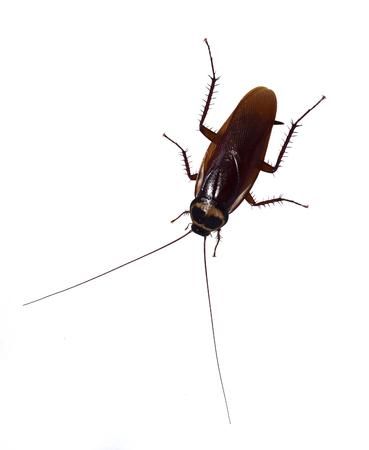 Cockroaches isolated on white background. Stockfoto